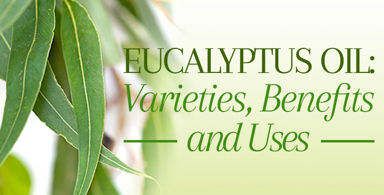 ALL ABOUT EUCALYPTUS OIL